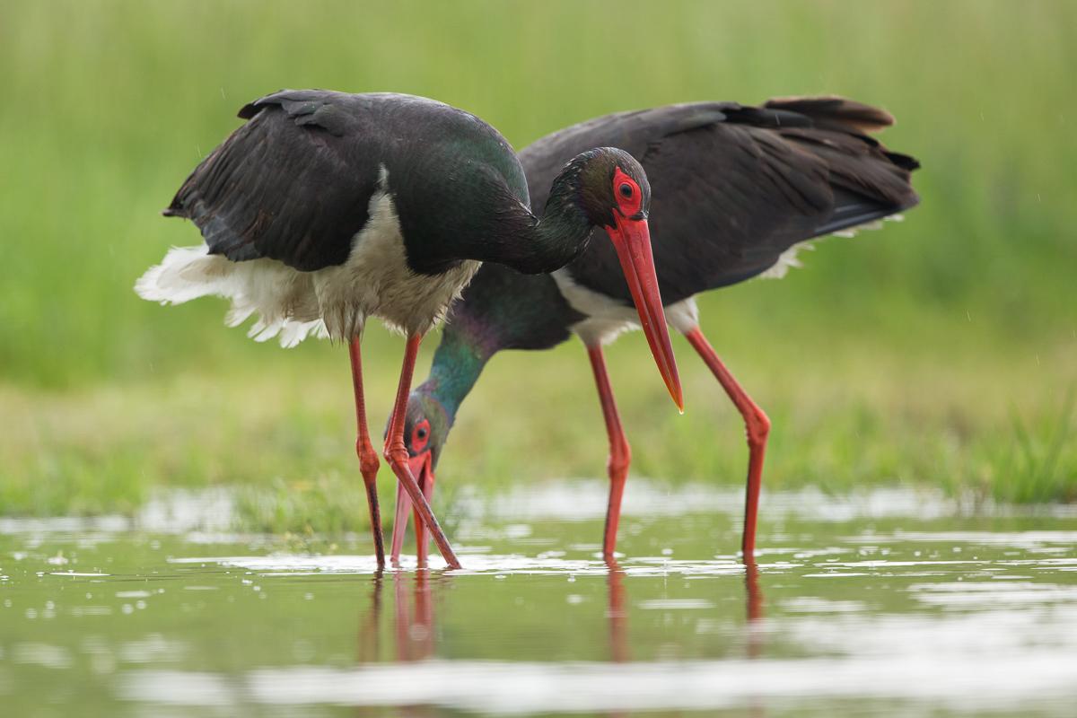 Blog-StorkEgret-11